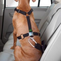 Harnais de sécurité chiens. http://www.romiaqs.com/