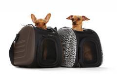 Sac de transport pour chiens http://www.romiaqs.com/